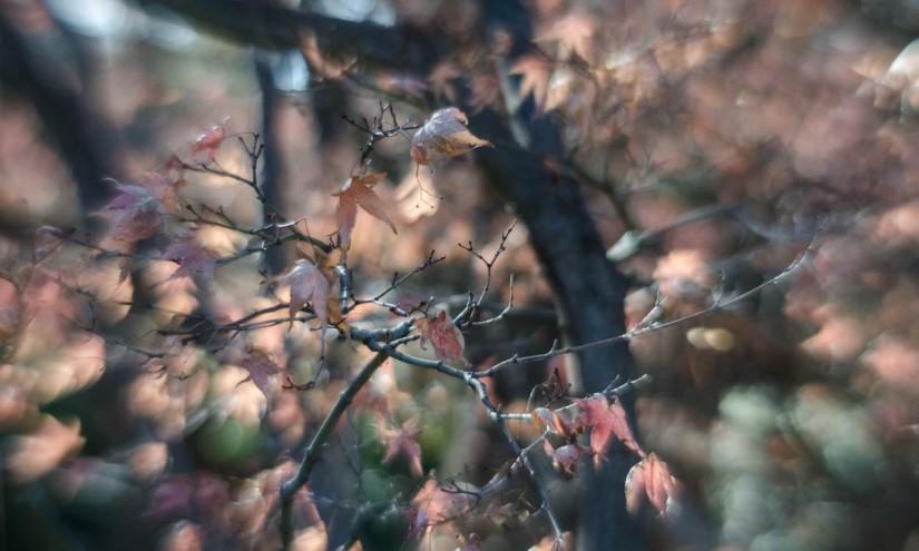 Fort Worth Botanical Gardens D7000 49 ©JamesECockroft-20140104