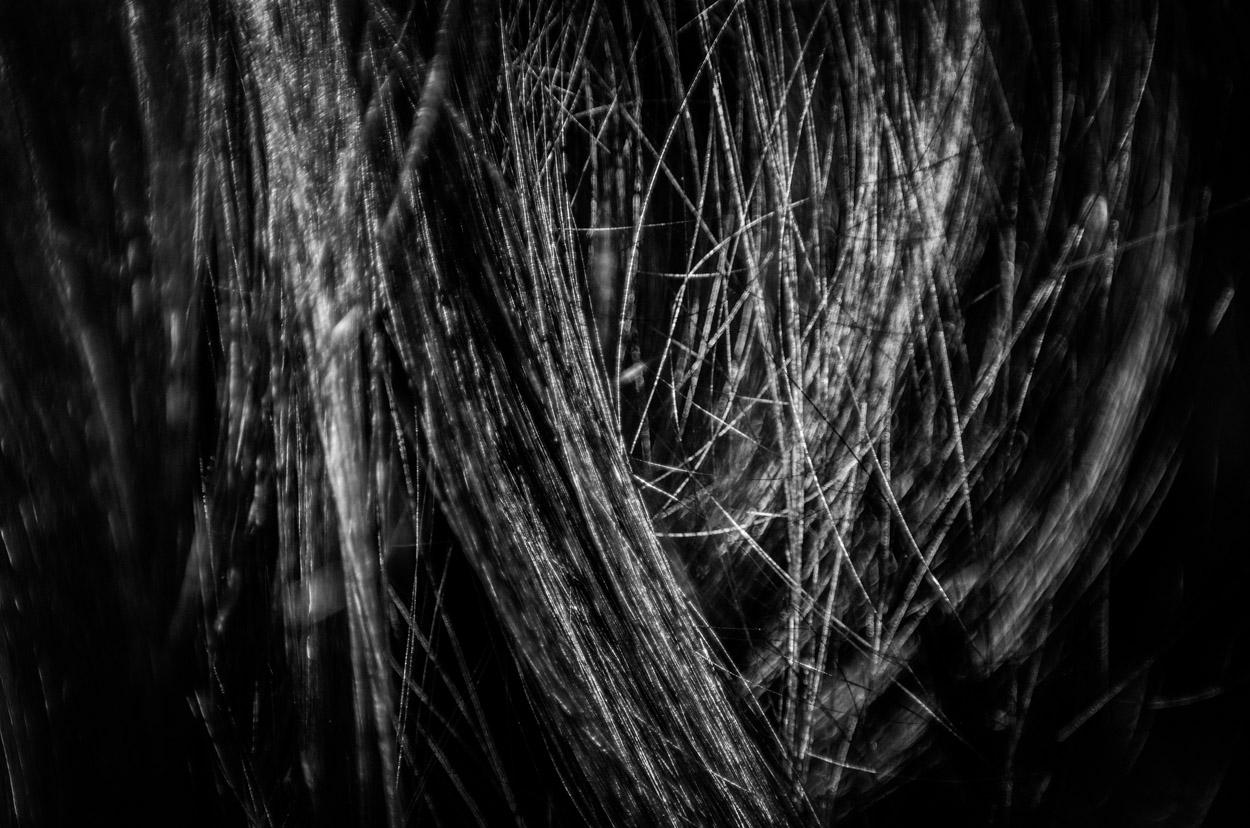 Hair Studies 2|7|©JamesECockroft-20140803