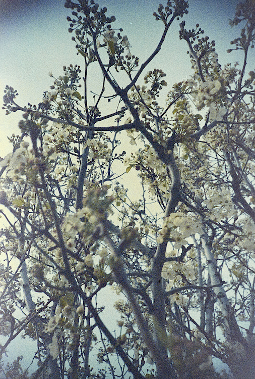unknown tree @200