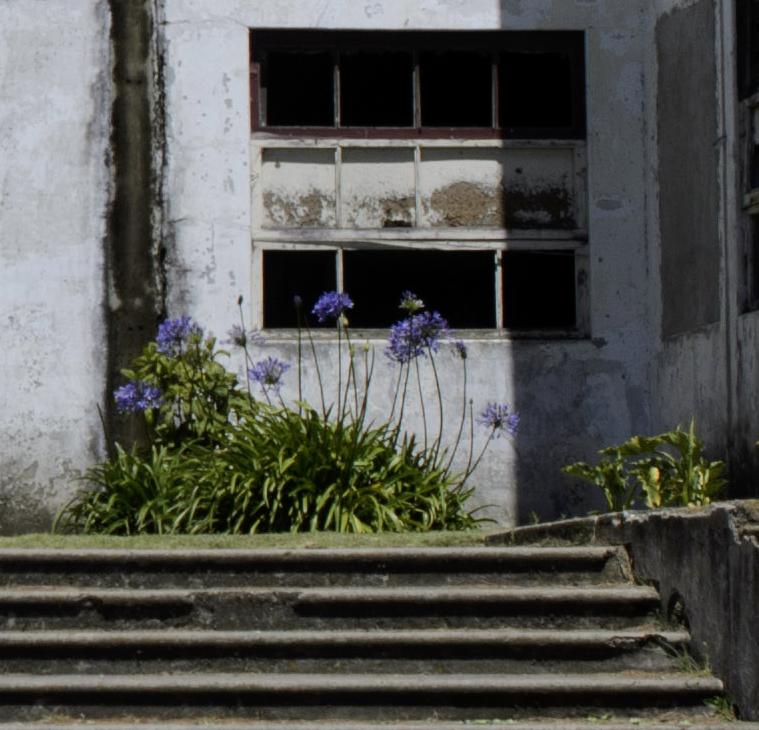 In Focus flowers Costa Rica Trip 2015-D7000 136 ©JamesECockroft-20150221