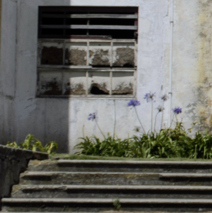Not In Focus Flowers Costa Rica Trip 2015-D7000 136 ©JamesECockroft-20150221